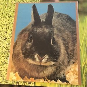 Other - Lot of 5 vintage bunny pictures